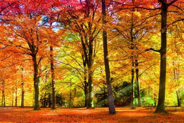 Sonniger Wald im Herbst